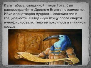 Культ ибиса, священной птицы Тота, был распространён в Древнем Египте повсеме