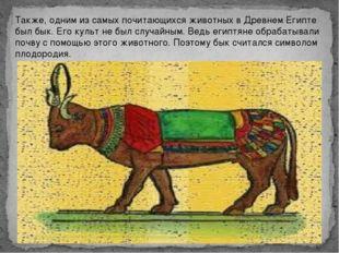 Также, одним из самых почитающихся животных в Древнем Египте был бык. Его кул