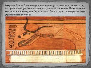 Умерших быков бальзамировали, мумии укладывали в саркофаги, которые затем уст
