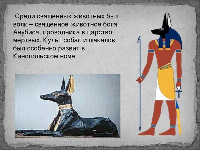 Среди священных животных был волк – священное животное бога Анубиса, проводн...