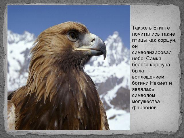 Также в Египте почитались такие птицы как коршун, он символизировал небо. Сам...