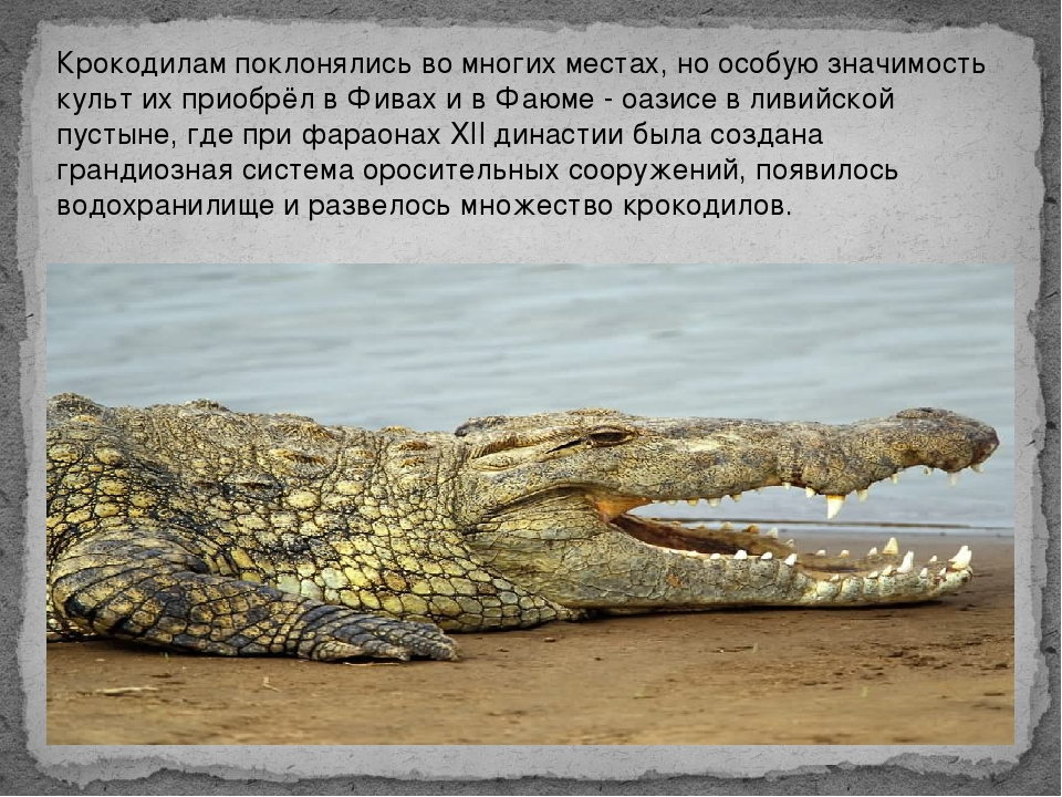 Крокодилам поклонялись во многих местах, но особую значимость культ их приобр...