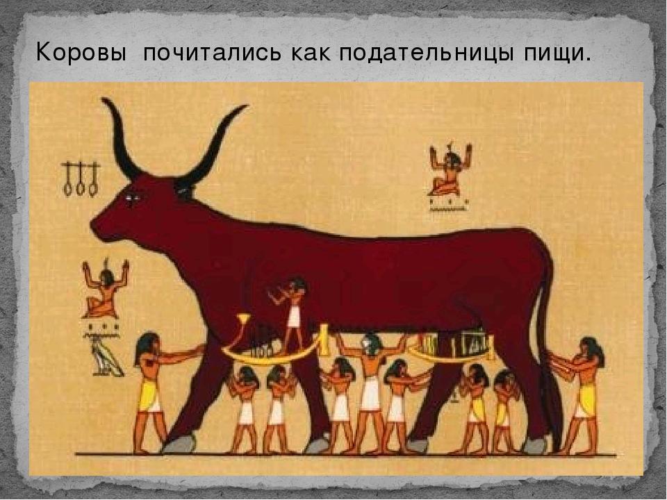 Коровы почитались как подательницы пищи.