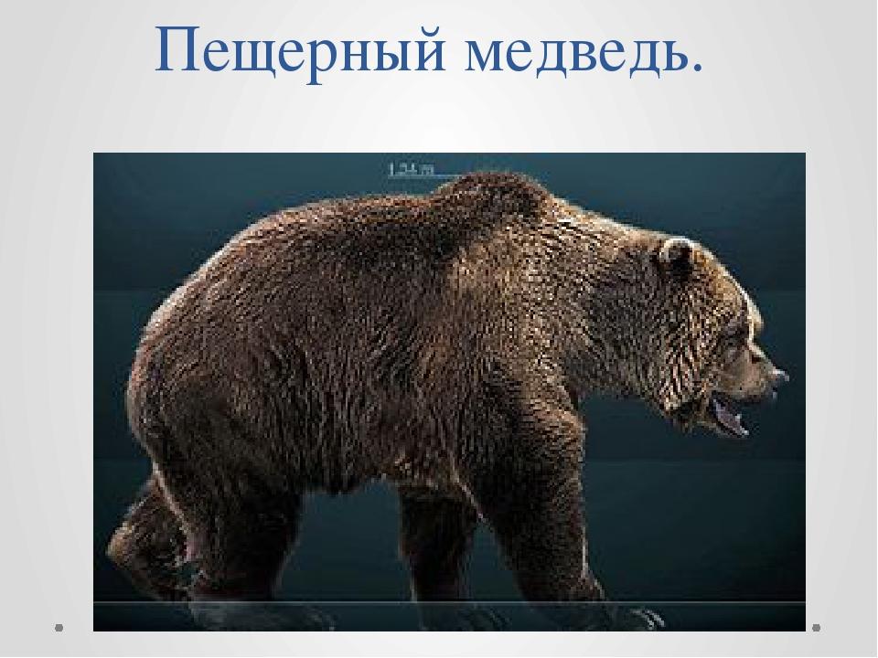 Пещерный медведь.