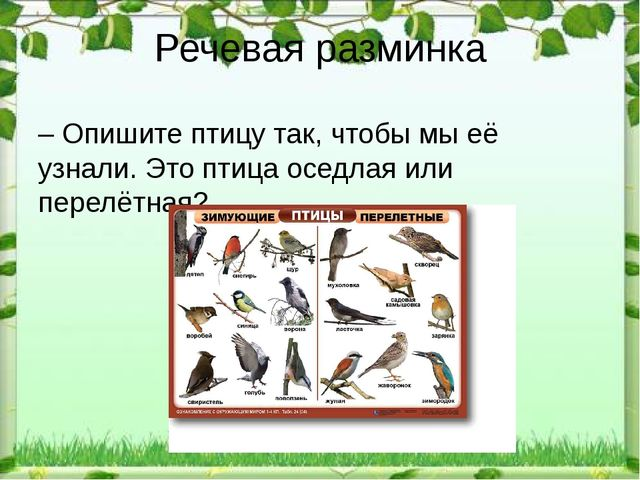 Речевая разминка – Опишите птицу так, чтобы мы её узнали. Это птица оседлая и...