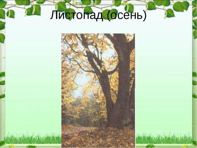 Листопад (осень)