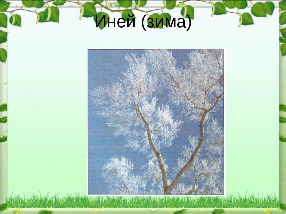 Иней (зима)