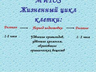 Деление 1-2 часа Период подготовки Удвоение органоидов, удвоение хромосом, об