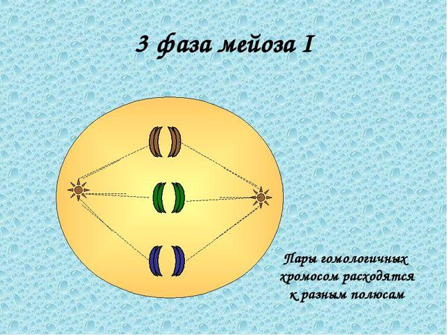 3 фаза мейоза I Пары гомологичных хромосом расходятся к разным полюсам