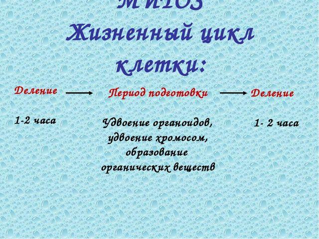 Деление 1-2 часа Период подготовки Удвоение органоидов, удвоение хромосом, об...