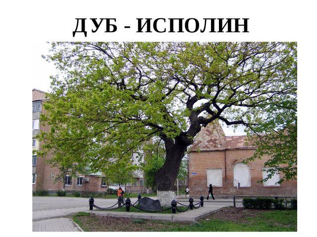 ДУБ - ИСПОЛИН