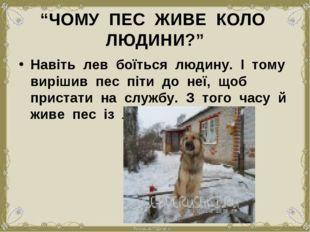 """""""ЧОМУ ПЕС ЖИВЕ КОЛО ЛЮДИНИ?"""" Навіть лев боїться людину. І тому вирішив пес пі"""