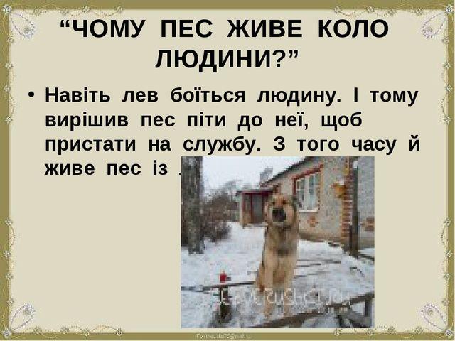 """""""ЧОМУ ПЕС ЖИВЕ КОЛО ЛЮДИНИ?"""" Навіть лев боїться людину. І тому вирішив пес пі..."""