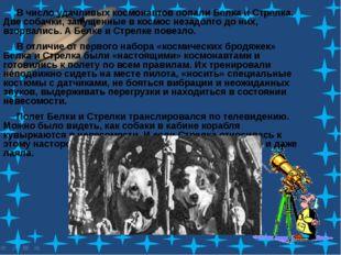 В число удачливых космонавтов попали Белка и Стрелка. Две собачки, запущенны