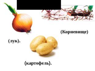 (лук). (картофель). (Корневище) Растения черного ящика