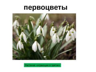 первоцветы Растения «играющие в прятки»