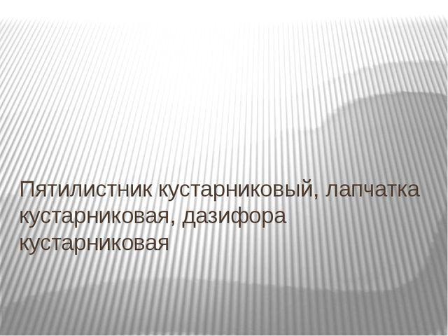 Пятилистник кустарниковый, лапчатка кустарниковая, дазифора кустарниковая