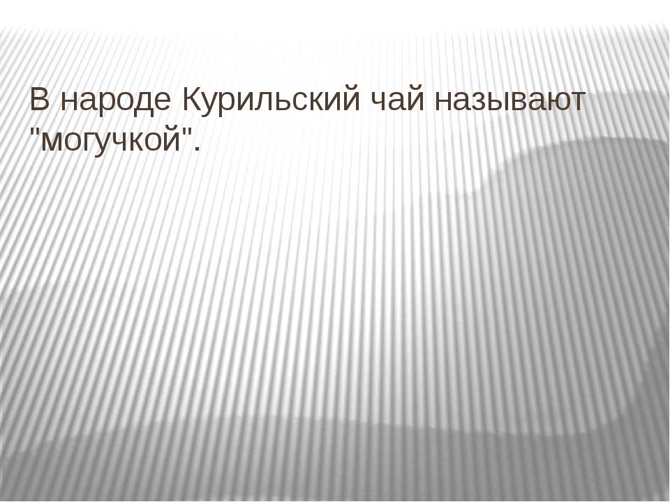 """В народе Курильский чай называют """"могучкой""""."""