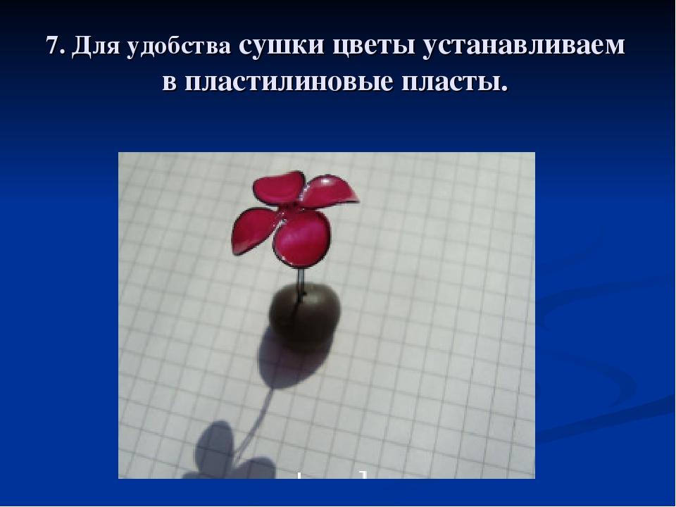 7. Для удобства сушки цветы устанавливаем в пластилиновые пласты.