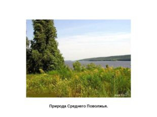 Природа поволжья, Волга Природа Среднего Поволжья.