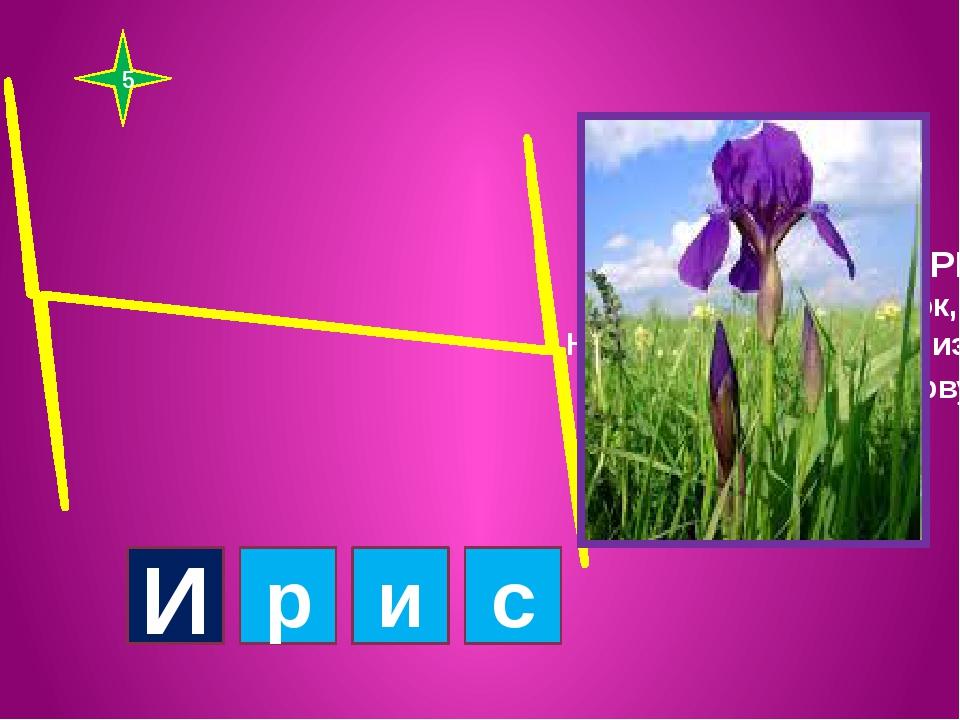 5 Если сложить И + РИС, расцветёт цветок, Но чтоб название произнести, сделай...