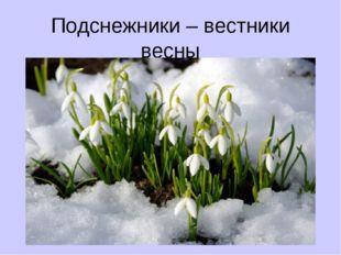 Подснежники – вестники весны