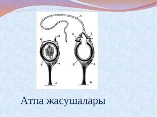 Атпа жасушалары