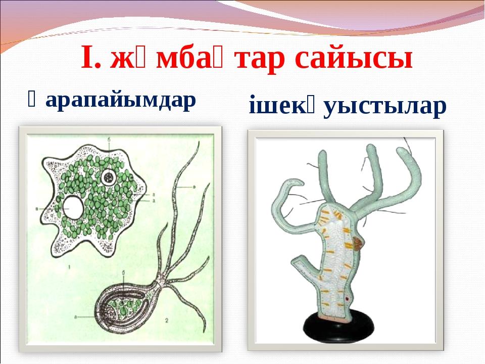 І. жұмбақтар сайысы Қарапайымдар ішекқуыстылар