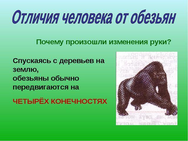 Почему произошли изменения руки? Спускаясь с деревьев на землю, обезьяны обыч...