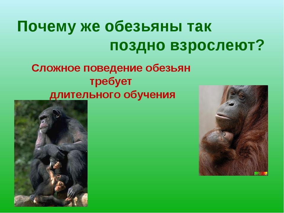 Почему же обезьяны так поздно взрослеют? Сложное поведение обезьян требует дл...