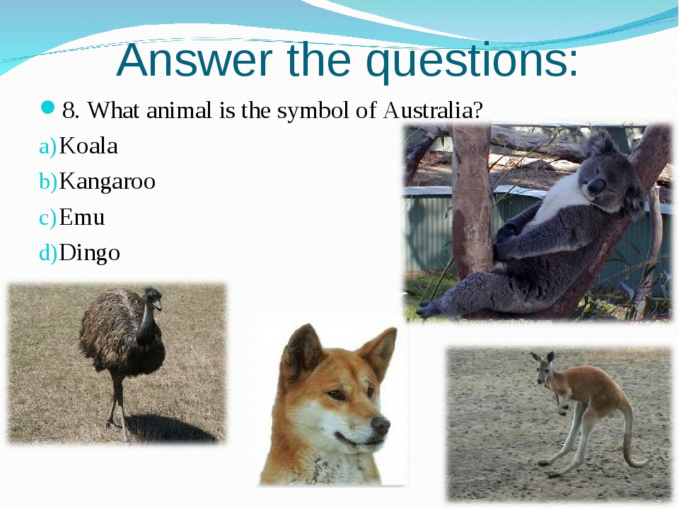 Answer the questions: 8. What animal is the symbol of Australia? Koala Kangar...