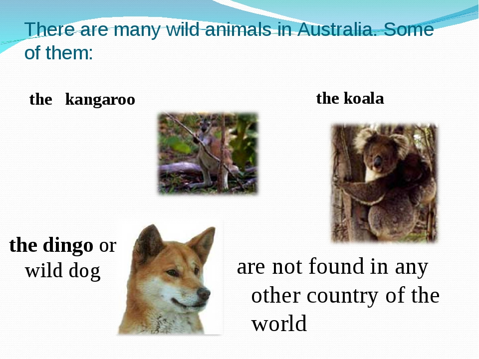 There are many wild animals in Australia. Some of them: the kangaroo the koal...
