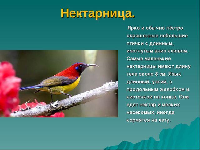 Нектарница. Ярко и обычно пёстро окрашенные небольшие птички с длинным, изогн...