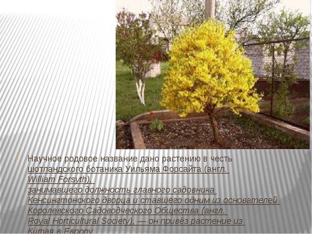 Научное родовое название дано растению в честьшотландскогоботаникаУильяма...