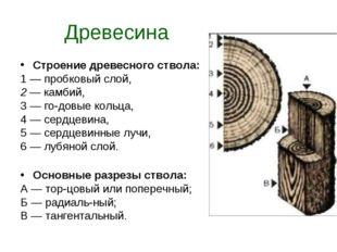 Древесина Строение древесного ствола: 1 — пробковый слой, 2 — камбий, 3 — го