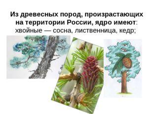 Из древесных пород, произрастающих на территории России, ядро имеют: хвойные
