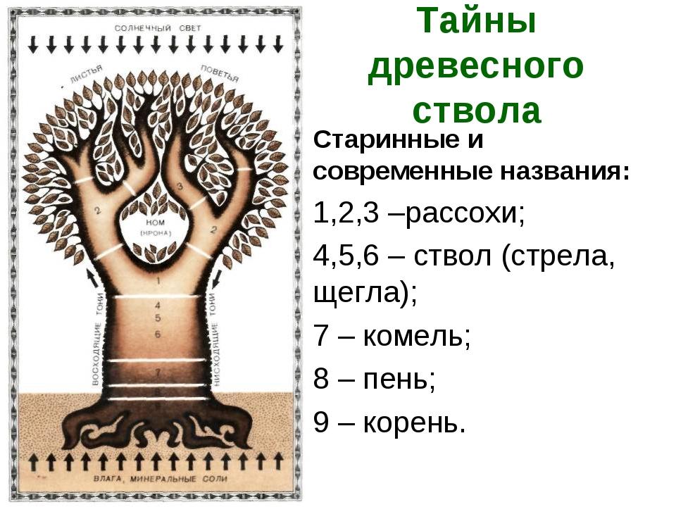 Тайны древесного ствола Старинные и современные названия: 1,2,3 –рассохи; 4,5...
