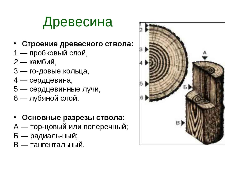 Древесина Строение древесного ствола: 1 — пробковый слой, 2 — камбий, 3 — го...