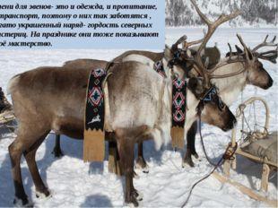 Олени для эвенов- это и одежда, и пропитание, и транспорт, поэтому о них так