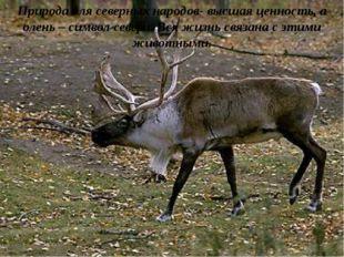 Природа для северных народов- высшая ценность, а олень – символ севера. Вся ж