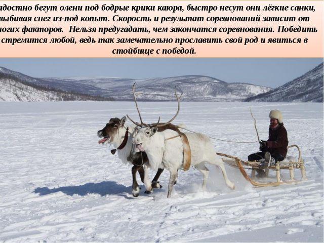 Радостно бегут олени под бодрые крики каюра, быстро несут они лёгкие санки, в...