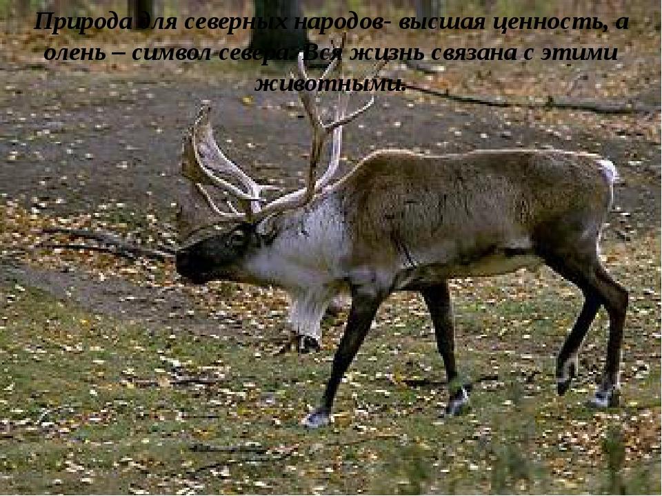 Природа для северных народов- высшая ценность, а олень – символ севера. Вся ж...