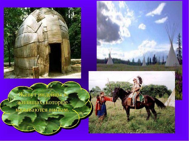 Живут индейцы в жилищах, которые называются вигвам.