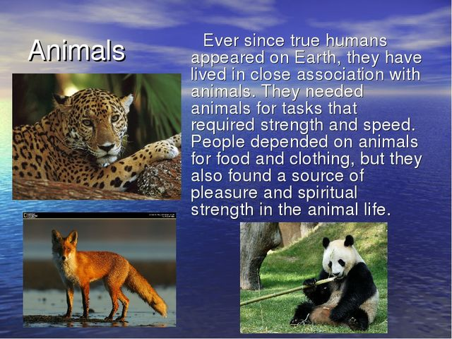 Animals Ever since true humans appeared on Earth, they have lived in close as...