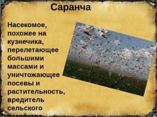 Саранча Насекомое, похожее на кузнечика, перелетающее большими массами и унич