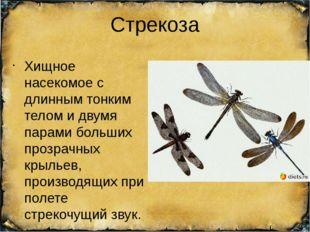Стрекоза Хищное насекомое с длинным тонким телом и двумя парами больших прозр