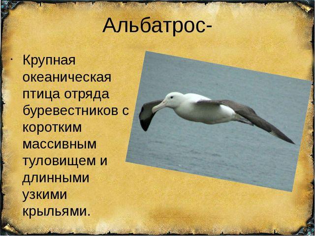 Альбатрос- Крупная океаническая птица отряда буревестников с коротким массивн...