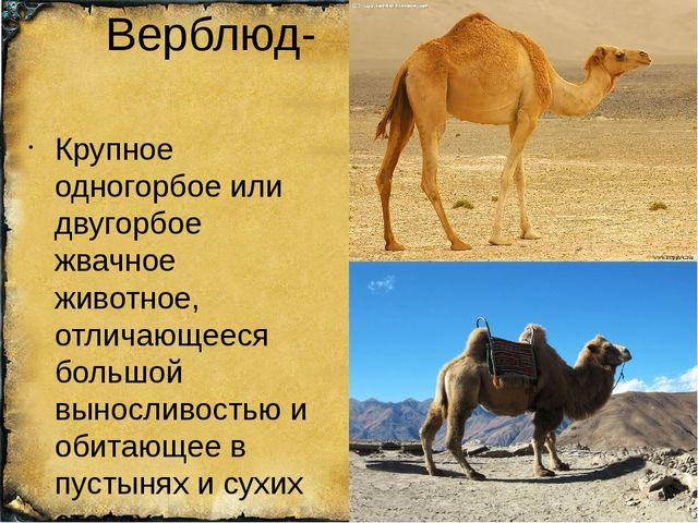 Верблюд- Крупное одногорбое или двугорбое жвачное животное, отличающееся боль...