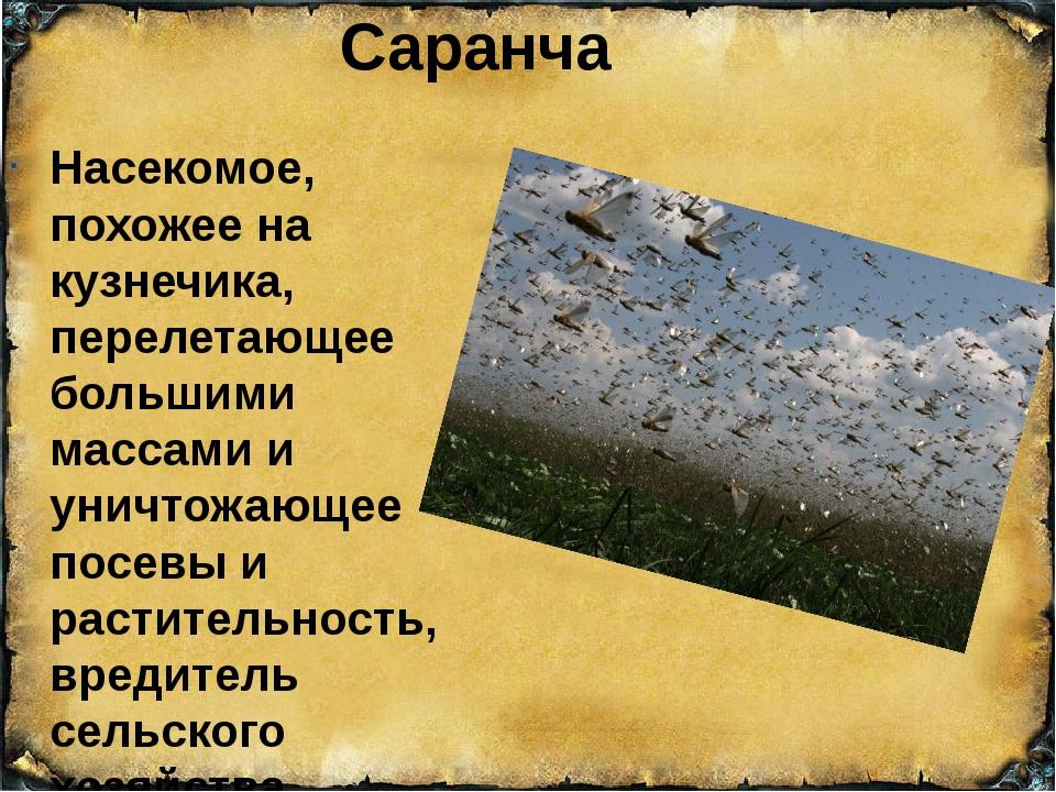Саранча Насекомое, похожее на кузнечика, перелетающее большими массами и унич...