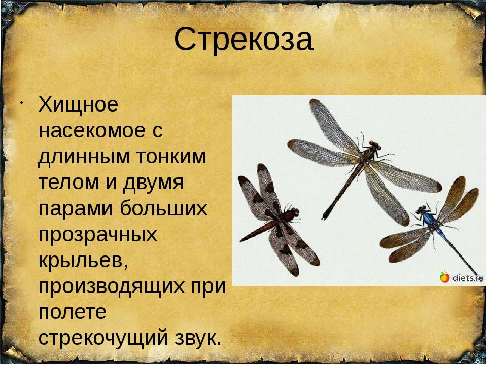 Стрекоза Хищное насекомое с длинным тонким телом и двумя парами больших прозр...